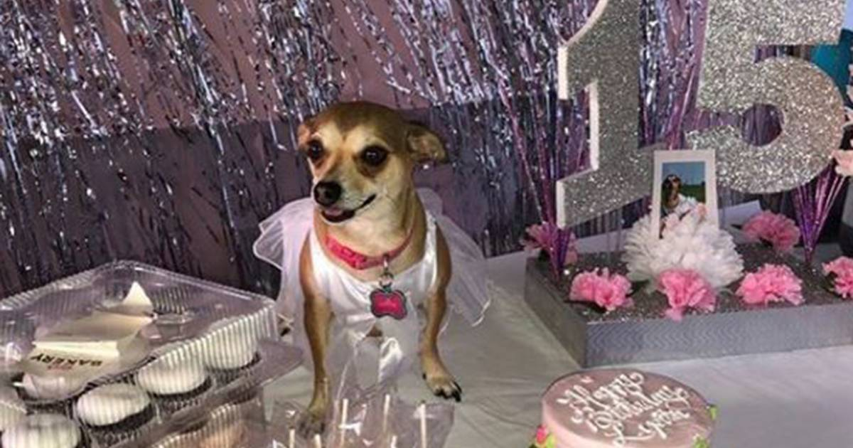 This adorable Chihuahua didn't just have a birthday party — she had a quinceañera!
