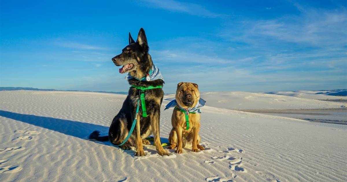 Top pet-friendly US vacation destinations for dogs