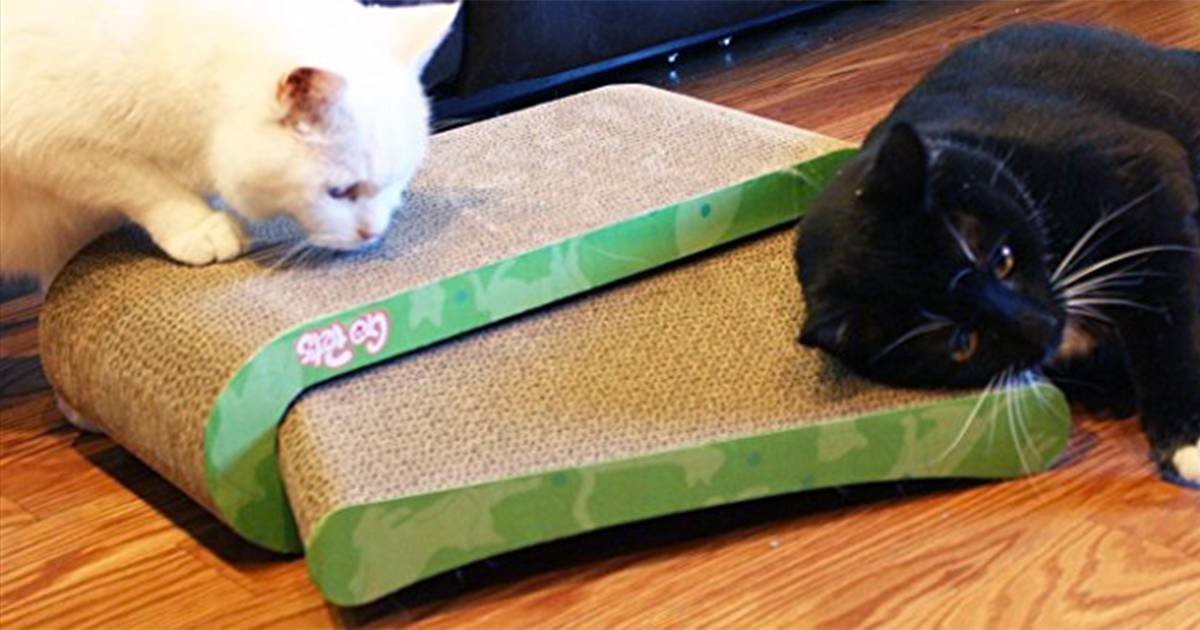 Deal Alert: This cat scratcher can save your furniture and is 51 percent off