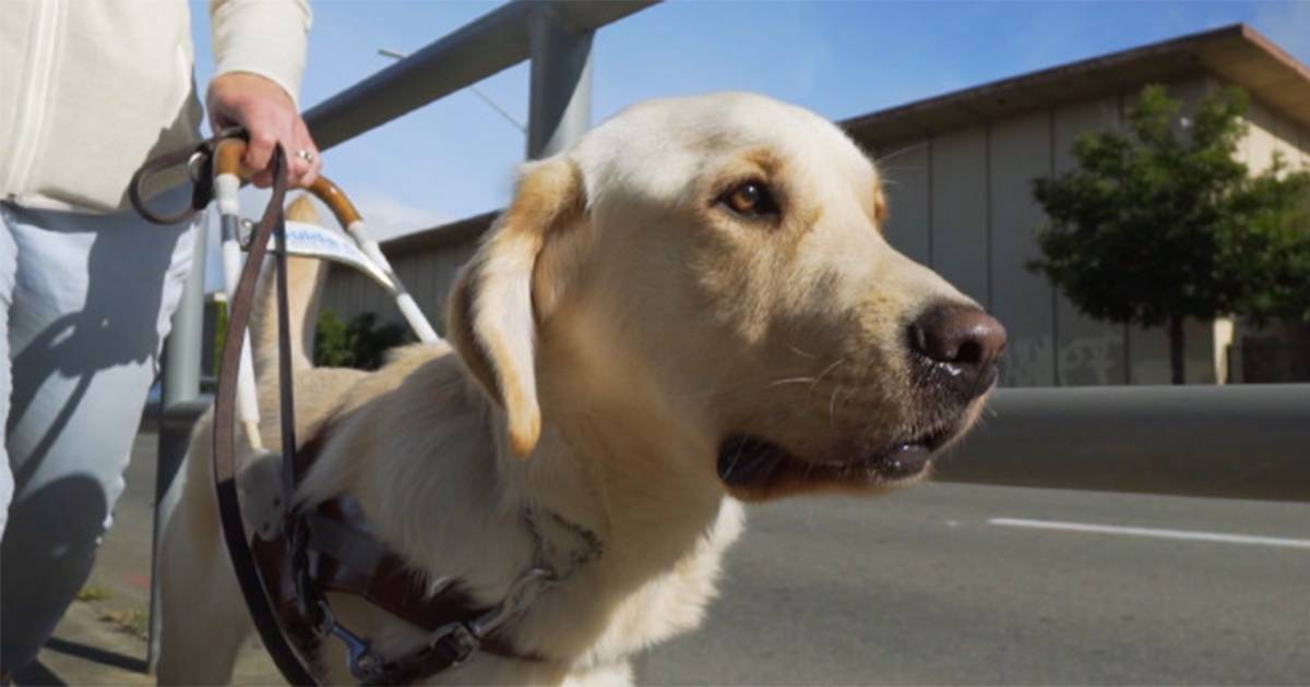 'Pick of the Litter' documentary follows puppies' guide dog training