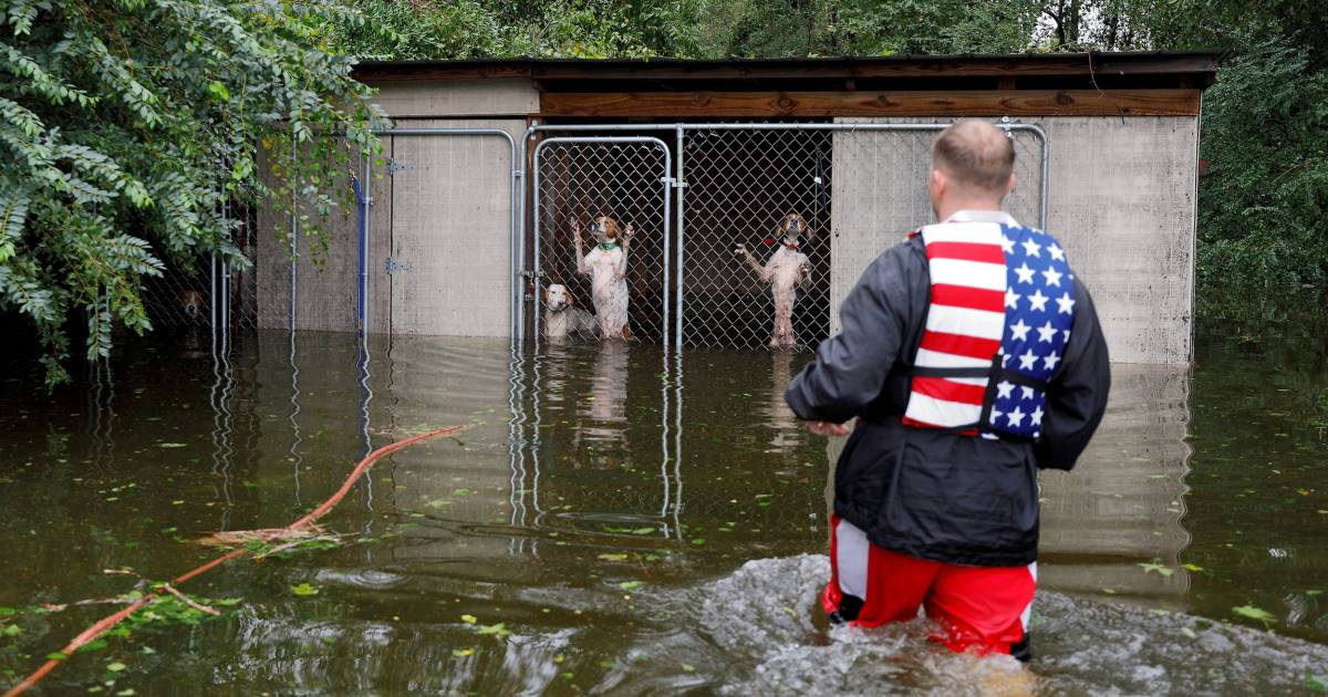 The animal rescuers of Florence: Dogs saved from submerged crate, pets shuttled away in bus