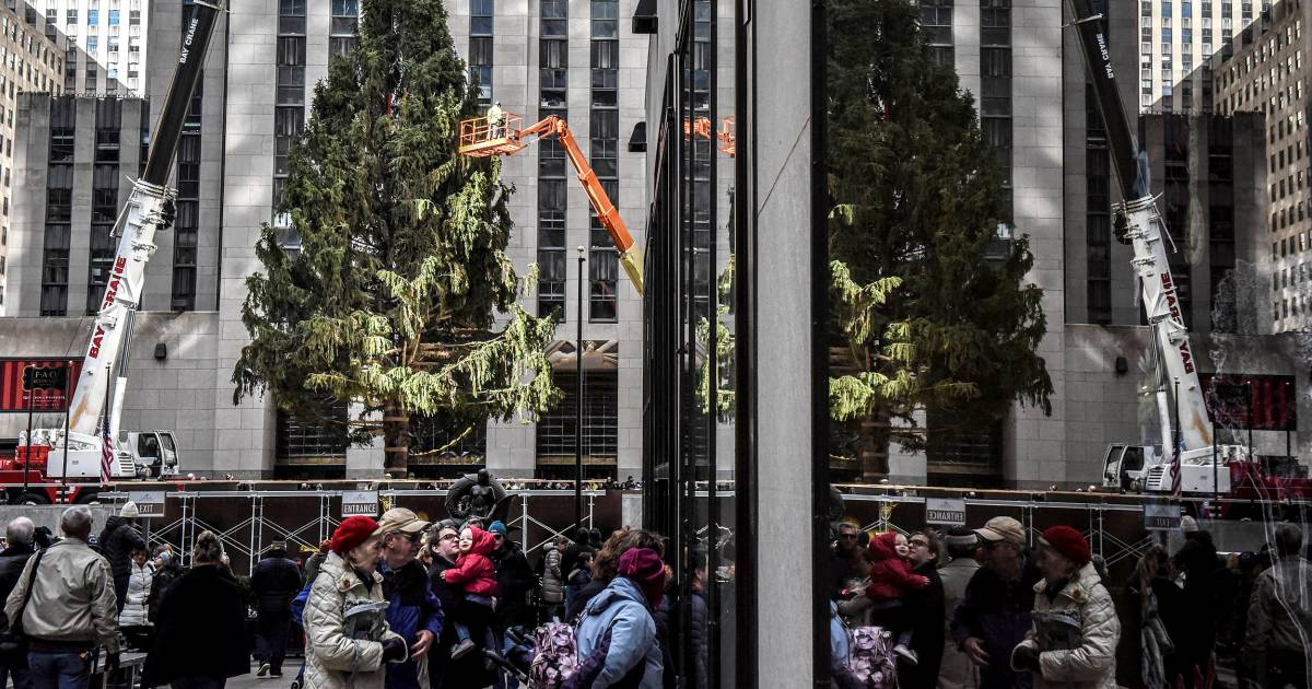 The Rockefeller Christmas Tree Journey From Upstate To The