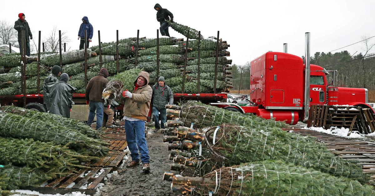 Why It May Be Harder To Find The Perfect Christmas Tree