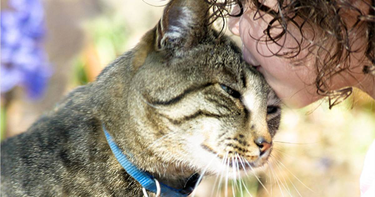 Love bites: How cats show they care