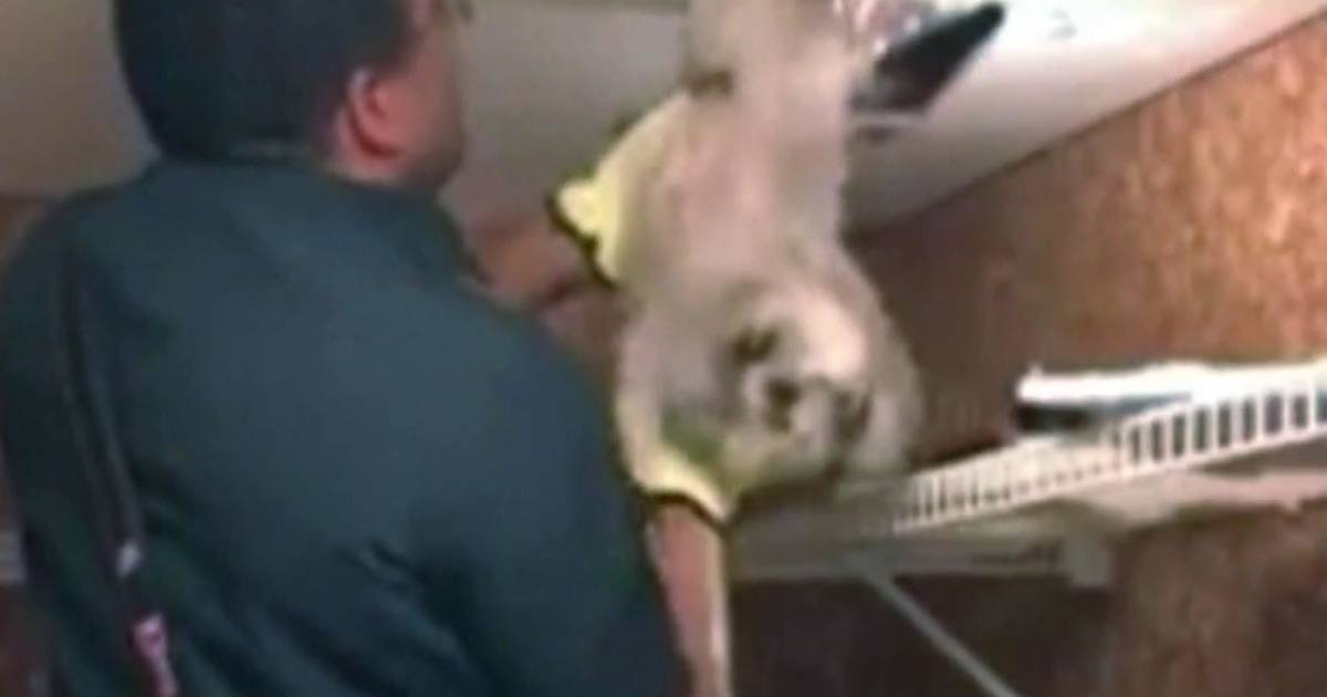 Dog rescued from ventilation duct in Virginia