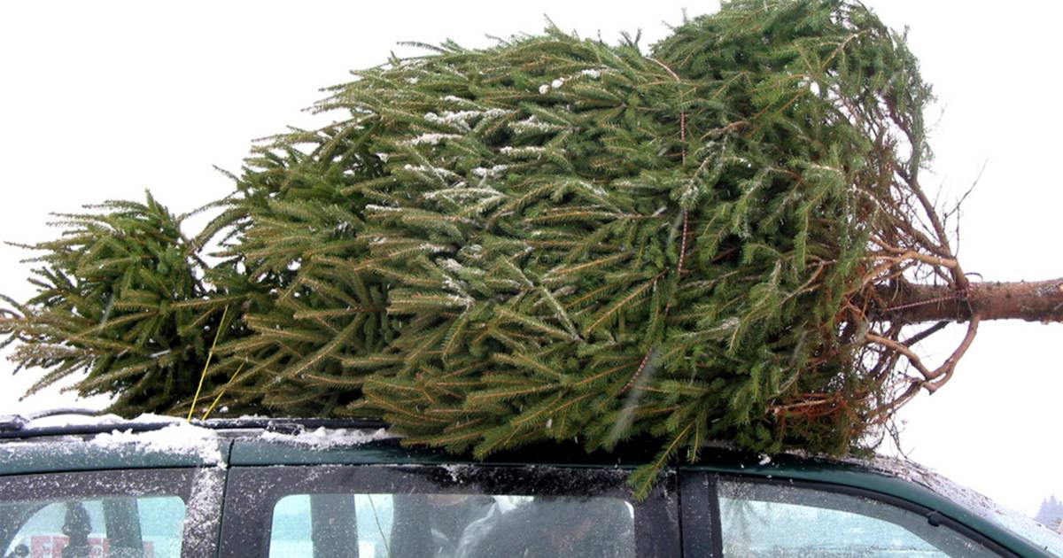 Get real: Christmas trees should not be artificial