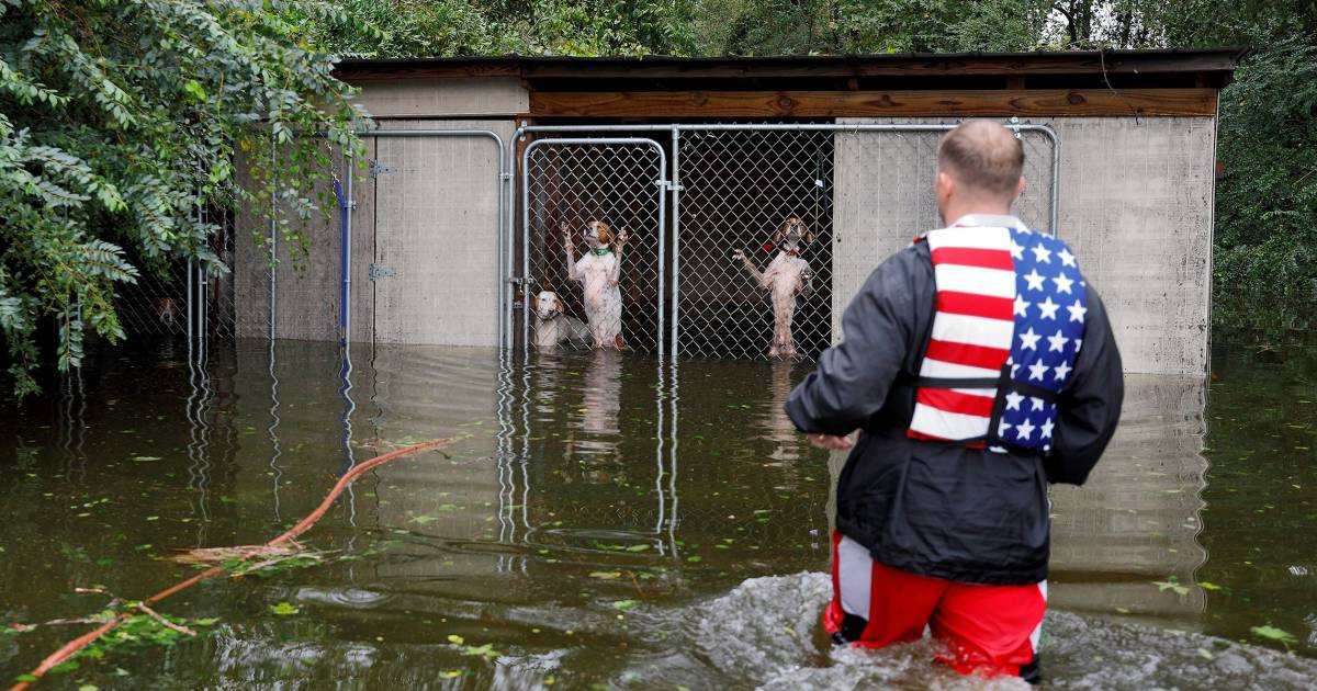 Hero volunteer rescues 6 dogs from rising Florence floodwaters