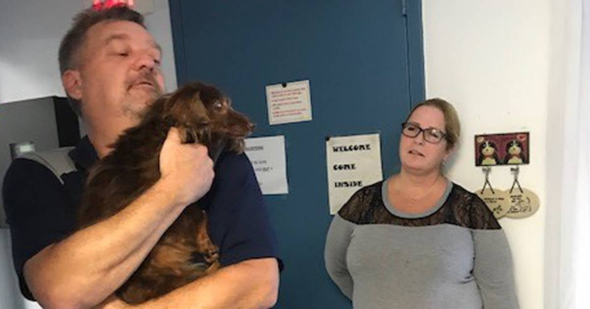 17-year-old dachshund reunited with owners 5 years after she went missing