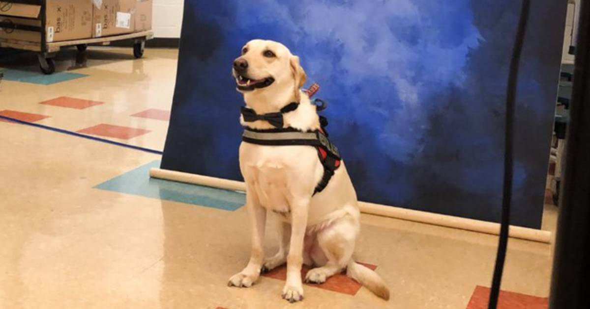 Service dog poses for yearbook photo (with bow tie!) and melts hearts everywhere