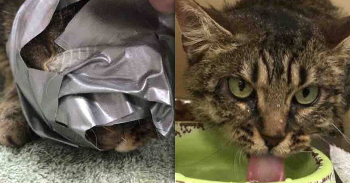 Cat found abandoned with duct tape around her head, but her spirit isn't broken