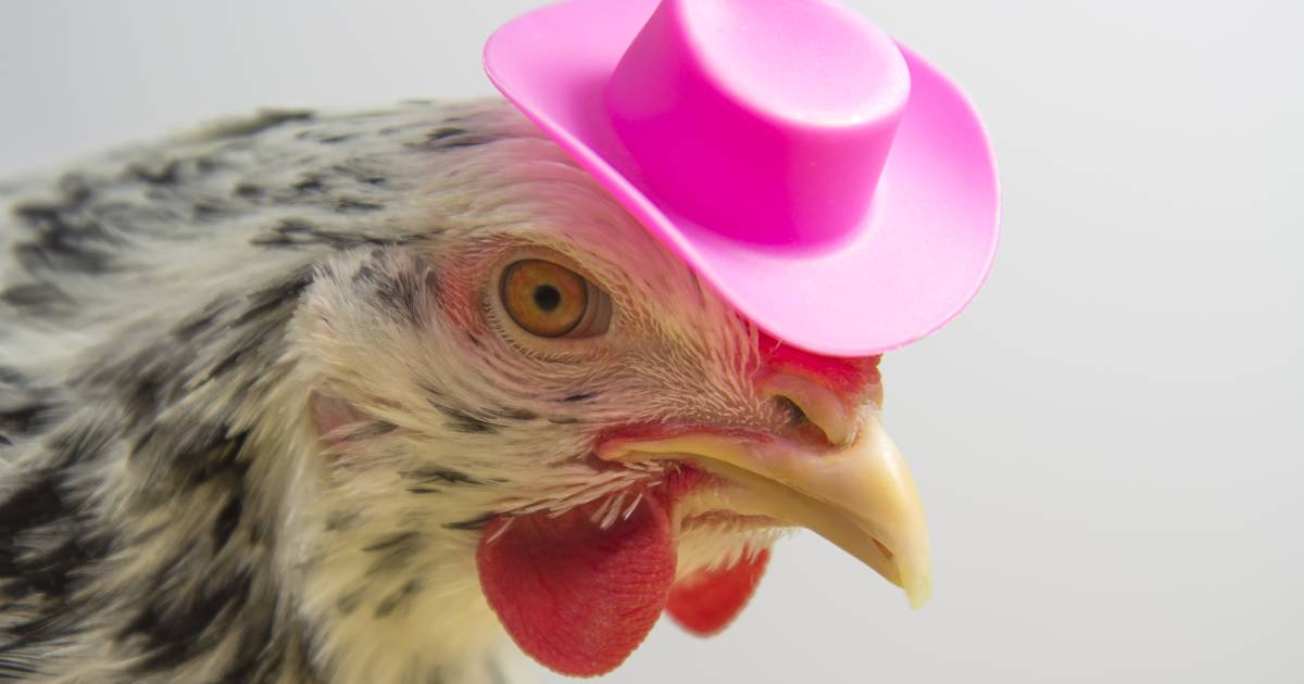 It's OK, you can dress chickens in Halloween costumes, CDC says