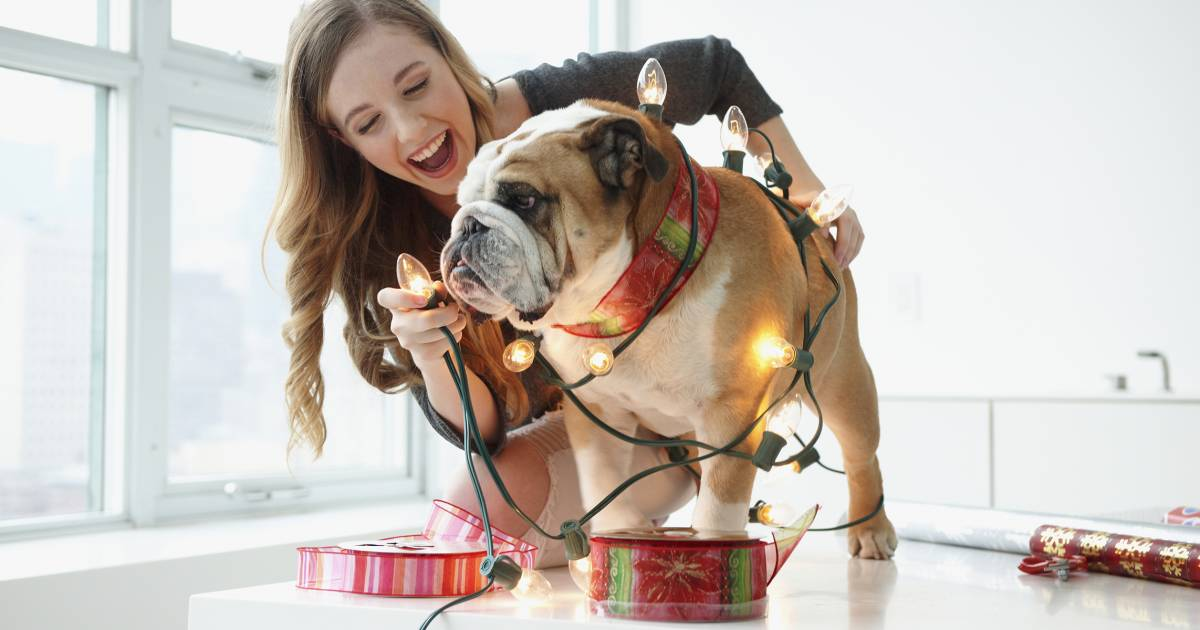 15 Best gifts for dog lovers 2018