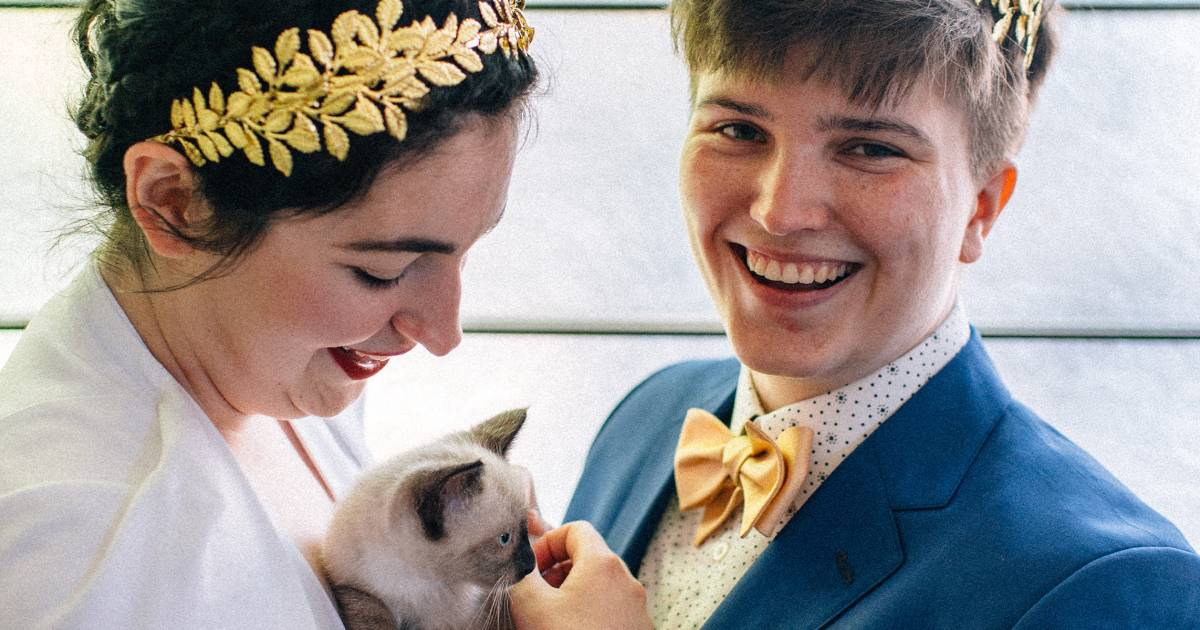 This couple had the purr-fect idea for their wedding — a kitten hour!