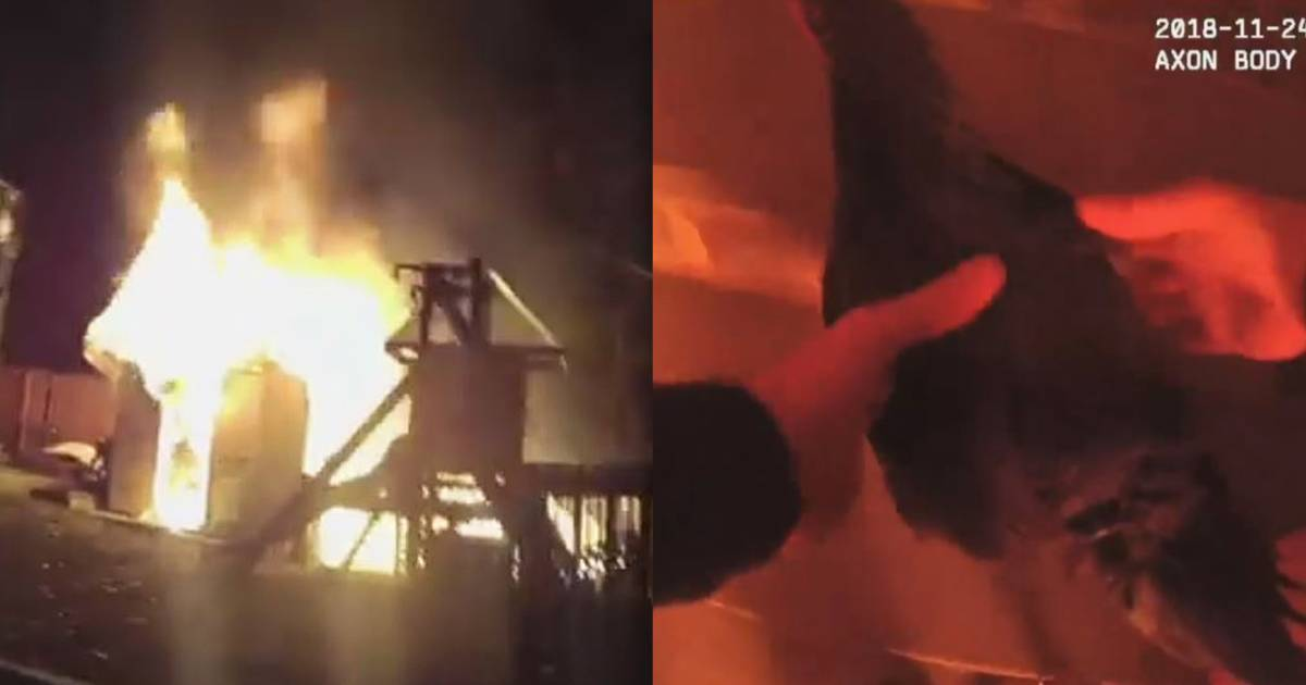 Video captures police officer saving clucking chicken from fire
