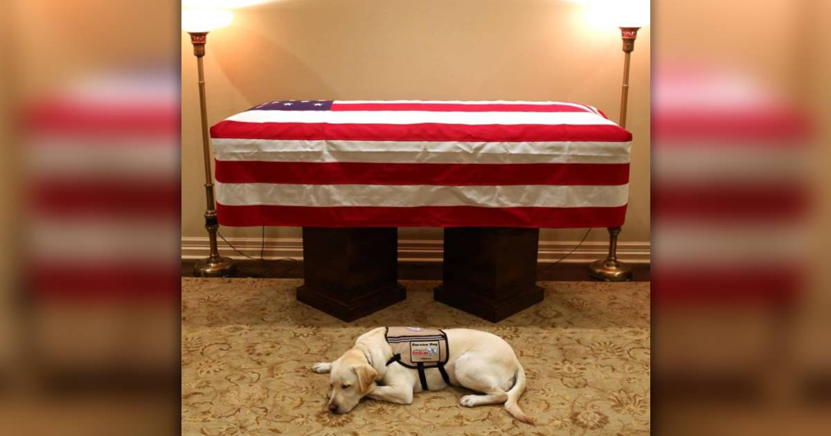 George H.W. Bush's dog Sully lies in front of casket in heartbreaking photo