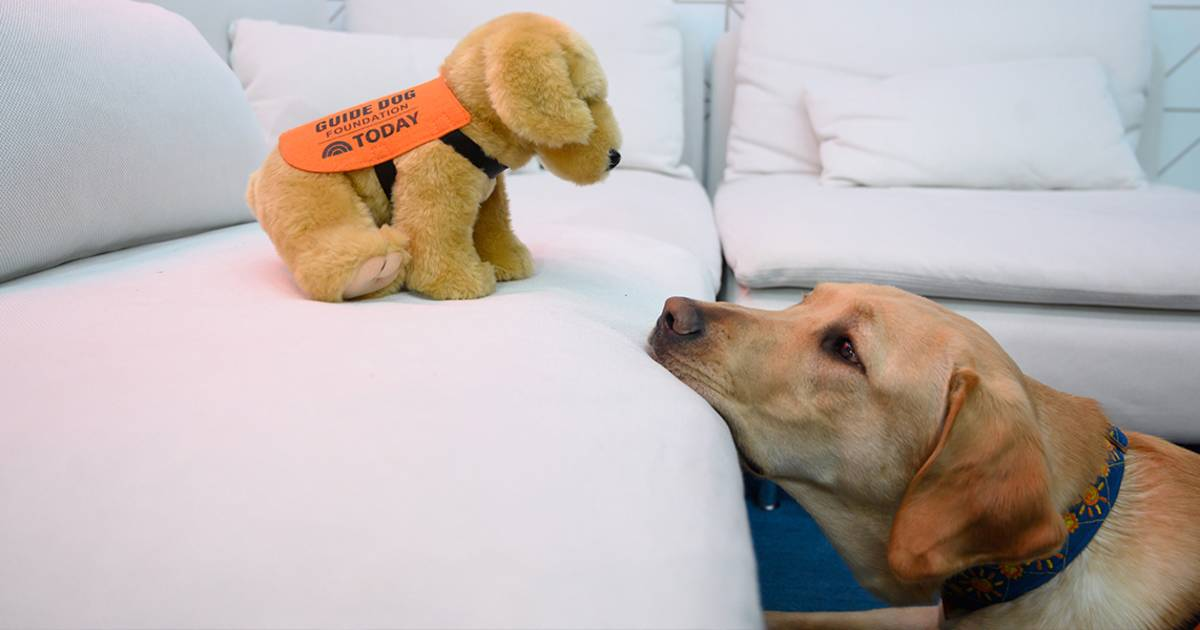 TODAY's puppy with a purpose, Sunny, now has his own plush! Here's how to get one