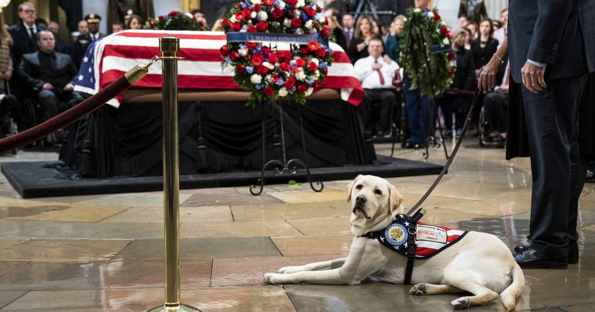 George H.W. Bush's service dog, Sully, pays respects to late president at US Capitol