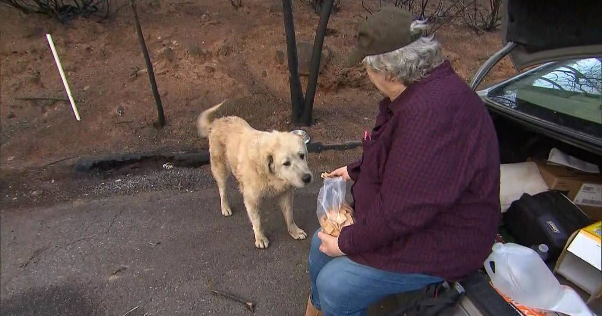 Owner has heartwarming reunion with dogs after Camp Fire destroyed her home