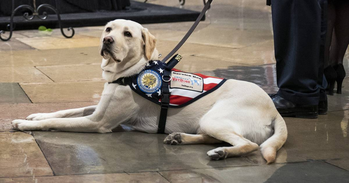 George H.W. Bush's service dog, Sully, gets ready for next assignment