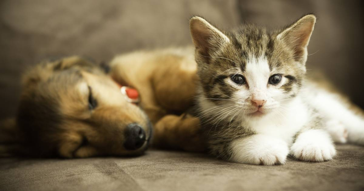 California will soon require pet stores to only sell rescue dogs and cats