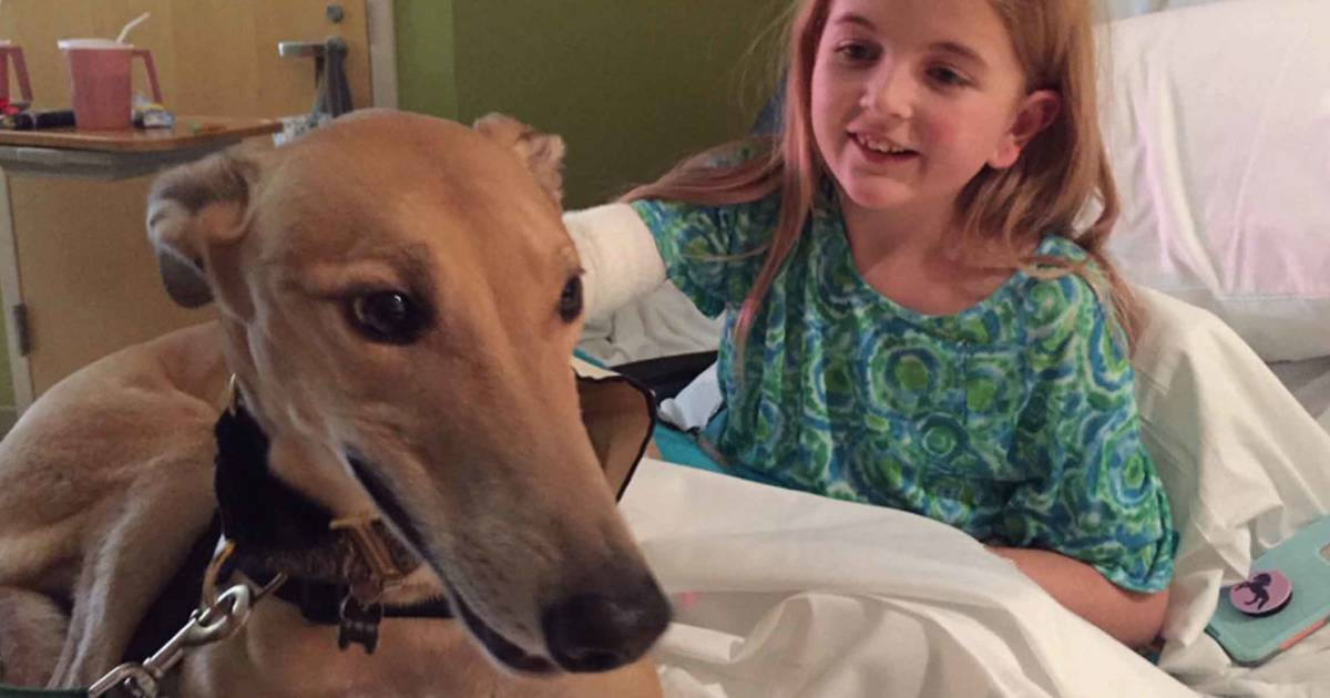 From racetrack to hospital: How 1 greyhound is changing lives of sick kids