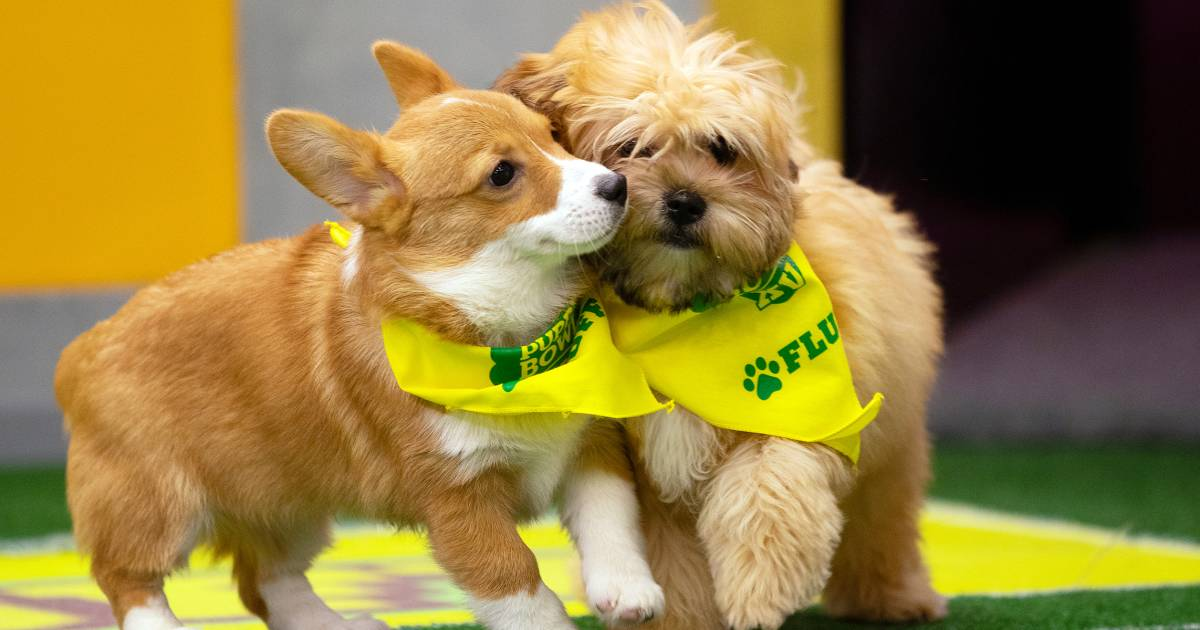 Animal Planet reveals the Puppy Bowl XV starting lineup