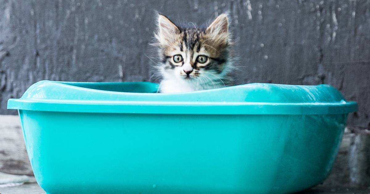 These are the best cat litters, according to a vet