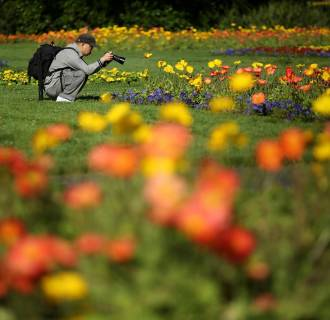 Image: A man photographs flowers blooming at the Conservatory of Flowers in the Golden Gate Park in San Francisco