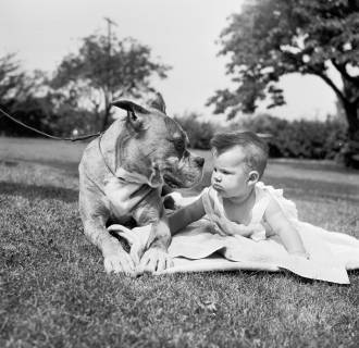 Image: Boxer And baby