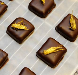 Image: Gold-coated crickets sit on chocolates