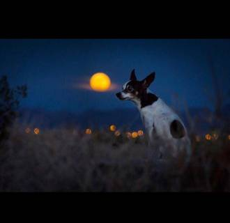Image: An Instagram user shares a photo of his dog, Sake, posing in front of Saturday night's supermoon.