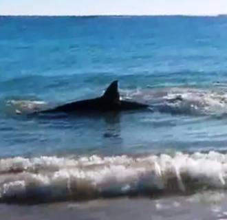 Image: Shark