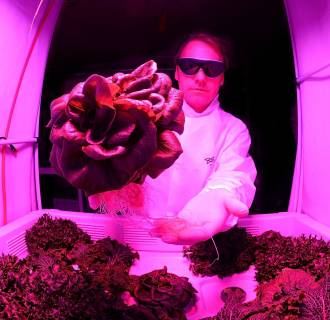 Image: Scientists Hope To Grow Salad In Space
