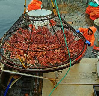 Image: A worker guides a crab pot full of red king crabs onto the deck of F/V Frigidland during the current fishery in the waters off of Juneau, Alaska