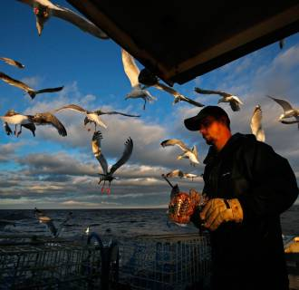 Image: Gulls are attracted to the bait bag held by sternman Brandon Demmons