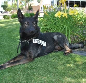 Otis/K-9 Unit in California