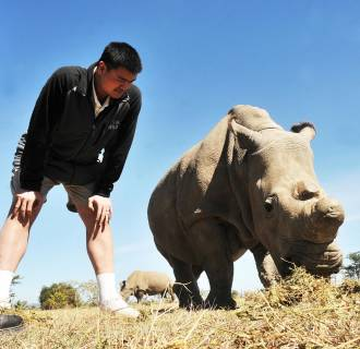 Yao Ming observes Northern White Rhinos