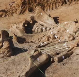Image: Mammoth bones
