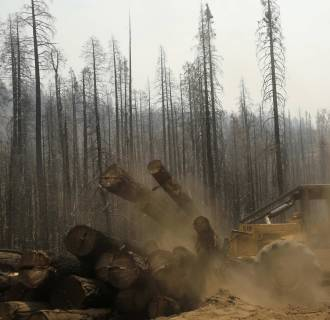 Image: An active logging site is pictured among burned trees from last year's Rim fire near Groveland