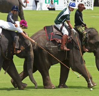 Image: Polo players battle for the ball while sitting on elephants