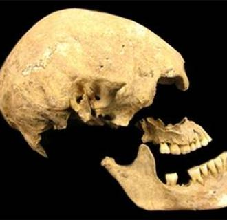 Image: Ancient skull