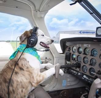 Image: Pilots N Paws