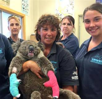 Image: The Australian Marine Wildlife Research & Rescue has been helping koalas affected by the wildfires in Australia.