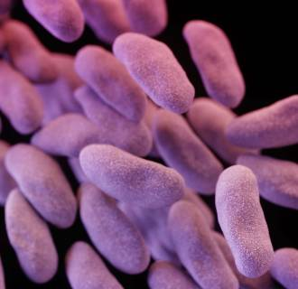 Image: Antibiotic-resistant Bacteria Found At Los Angeles Hospital