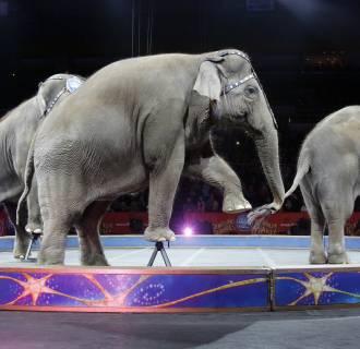 IMAGE: Ringling Bros. Circus elephant