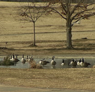 Image: Montgomery County, Maryland, believes it has a solution to a bird problem in its county parks.