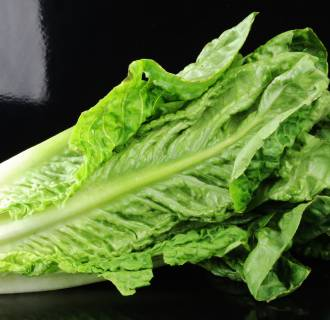 Romaine lettuce on a black background (Lactuca sativa L. var. longifolia)