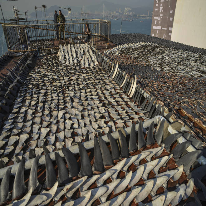 China's official crackdown on graft brings a happy New Year – for sharks