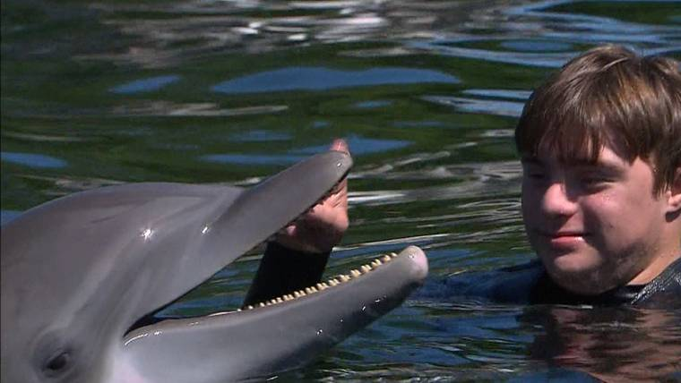 Therapy dolphin who helps disabled kids gets life-saving surgery