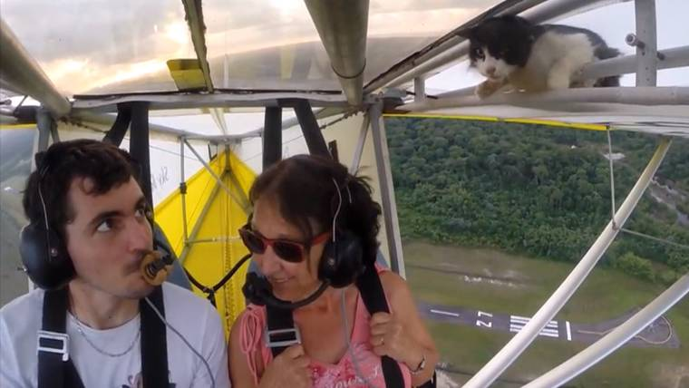 Couple on open-cockpit glider discover surprise stowaway: a cat!